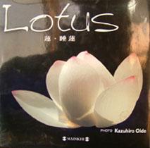 lotus%20book.JPG
